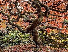 Como começar a fazer minha árvore genealógica?